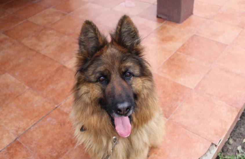 Lexie, câinele meu minune, mor de dragul ei