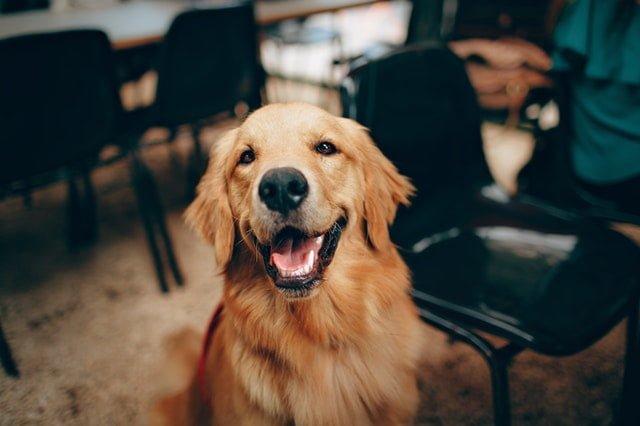🐶 Dresajul canin, arta de a-ți înțelege cel mai bun prieten patruped